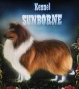 Sunborne Kennel